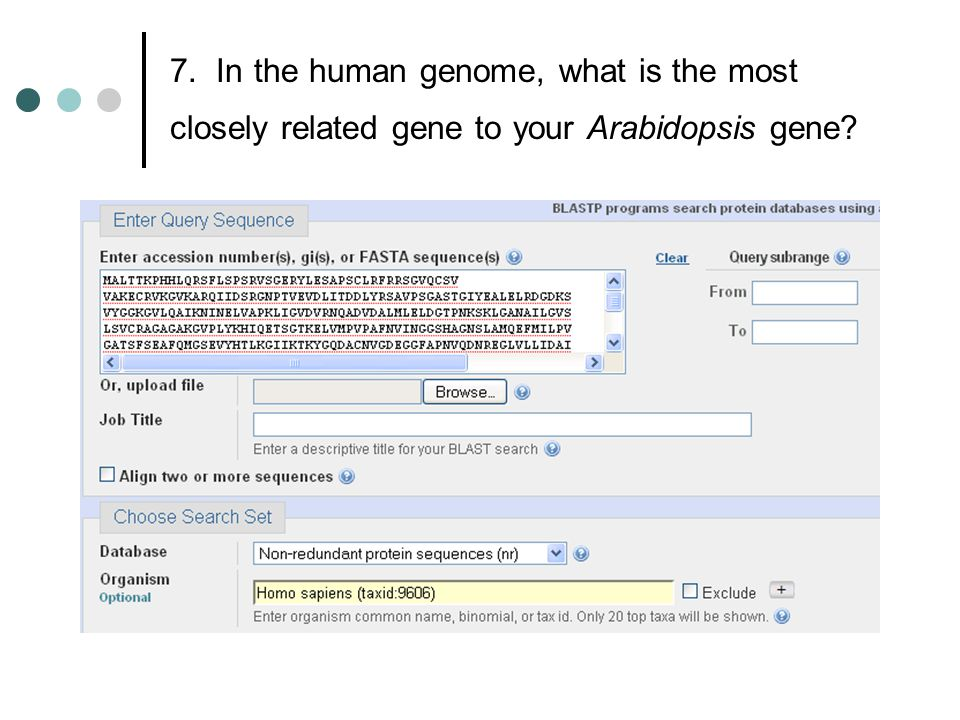 7. In the human genome, what is the most closely related gene to your Arabidopsis gene