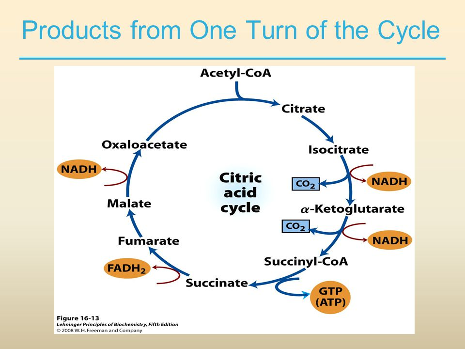 Products from One Turn of the Cycle