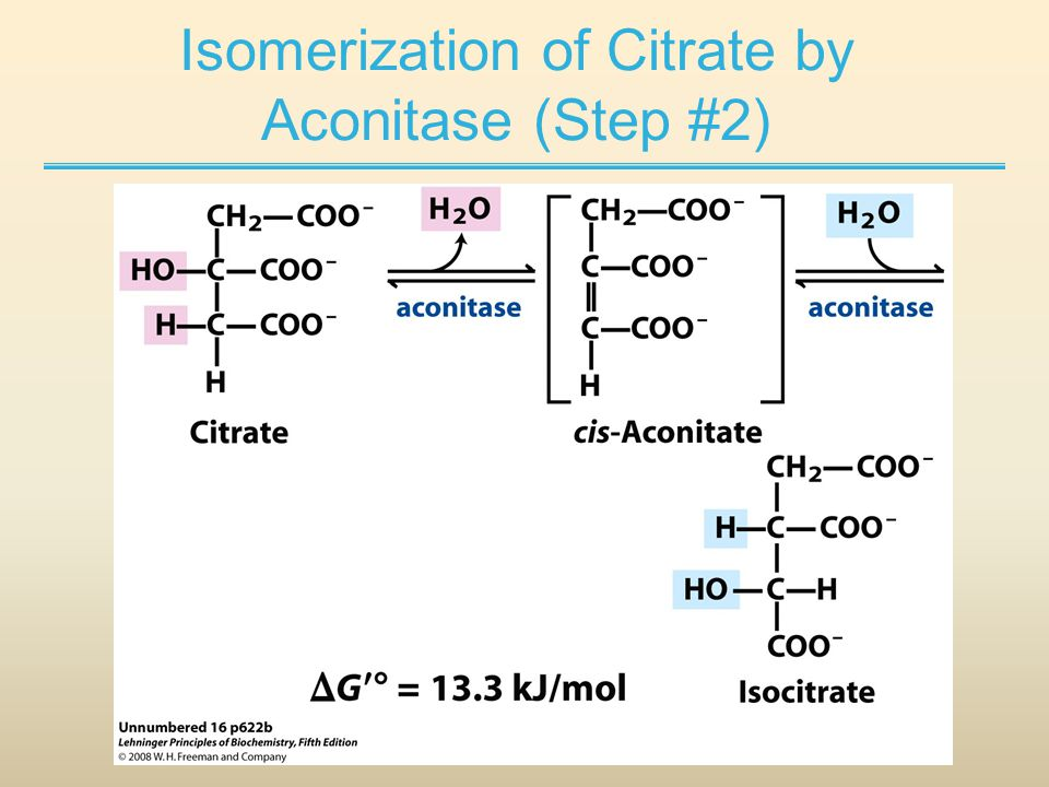 Isomerization of Citrate by Aconitase (Step #2)