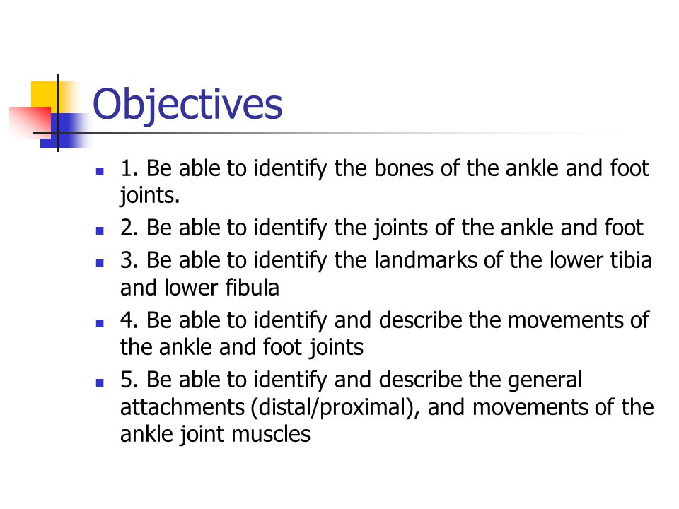 Ankle And Foot Joint Anatomy And Physiology Of Human Movement 420