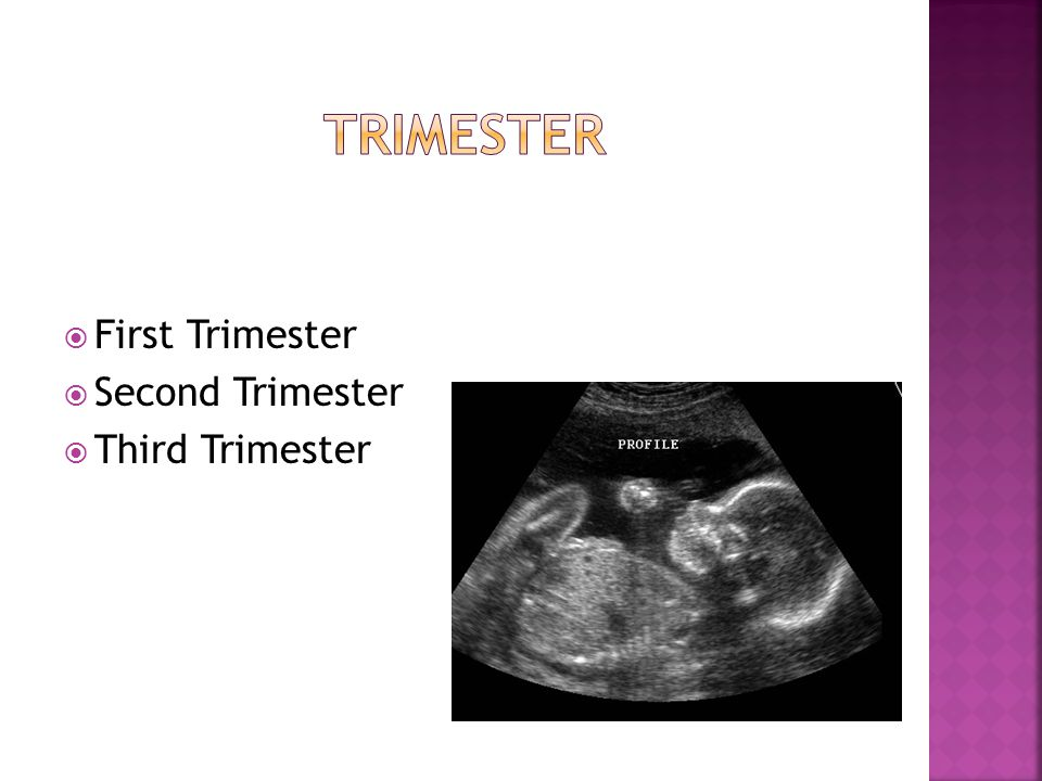  First Trimester  Second Trimester  Third Trimester