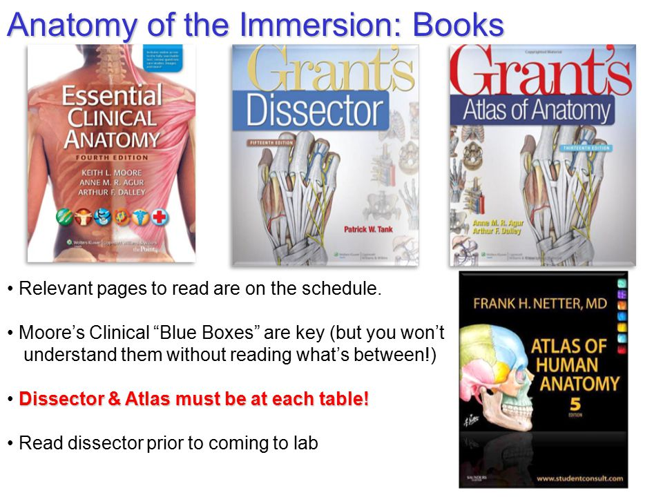 """Osteopathic Clinical Anatomy Orientation: """"The Immersion"""" Lawrence M ..."""