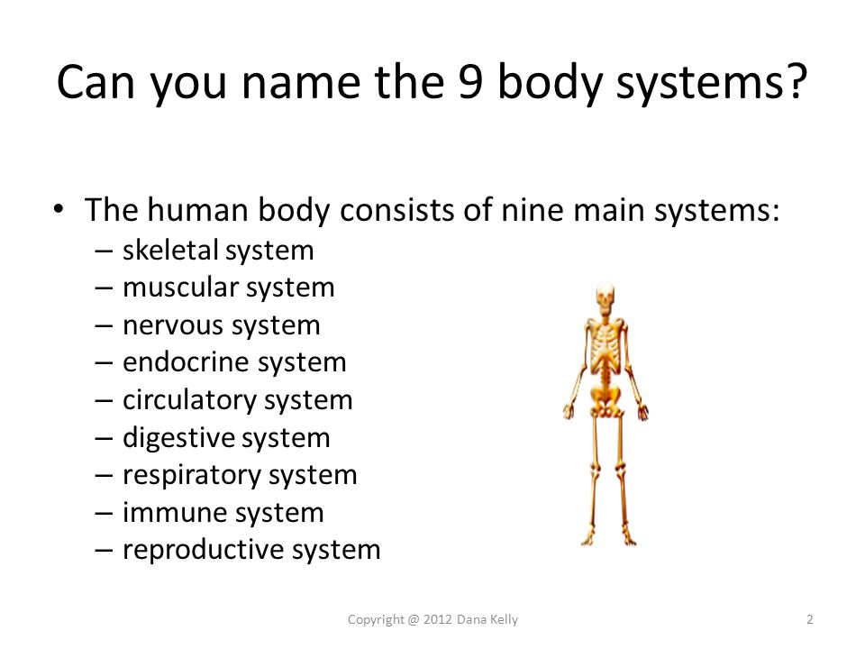 Human Anatomy Physiology Trivia Here Are Some Interesting Facts