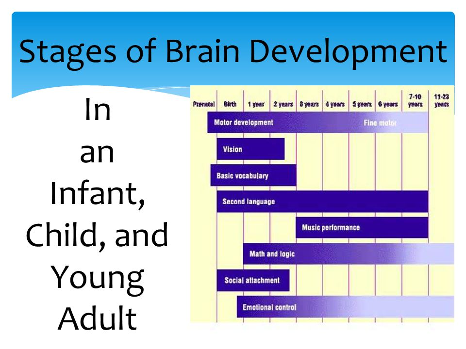 4 Stages of Brain Development In an Infant, Child, and Young Adult
