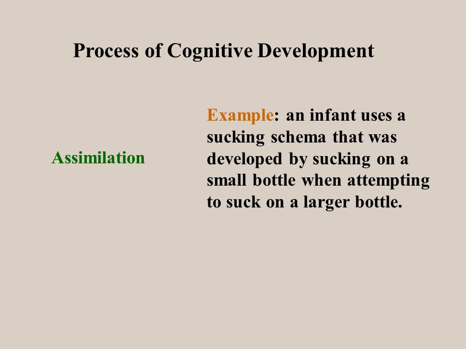 Process of Cognitive Development Assimilation Example: an infant uses a sucking schema that was developed by sucking on a small bottle when attempting to suck on a larger bottle.