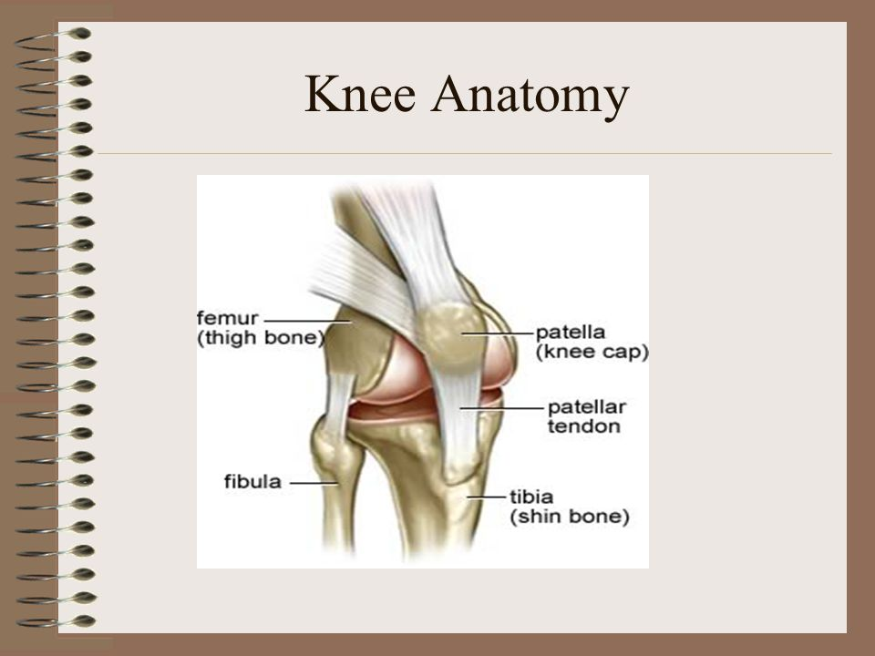 Patellofemoral Pain. Objectives 1.Understand the anatomy of the ...