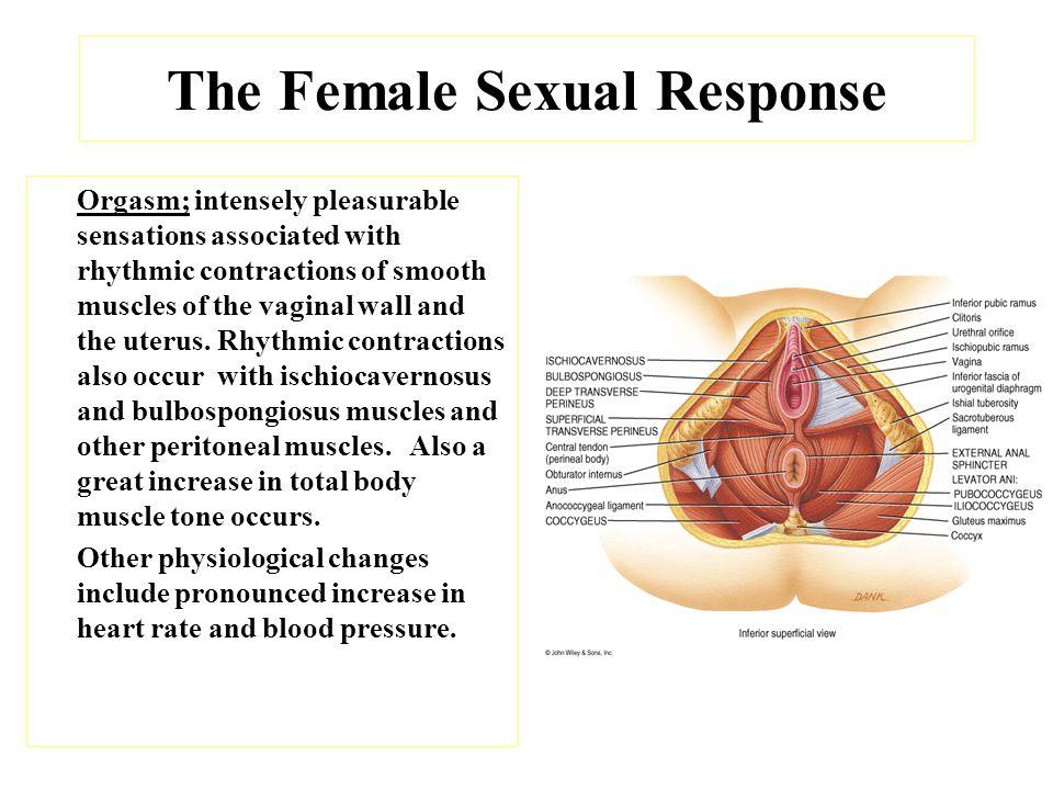 anatomy-of-the-female-orgasim-g-i-joe-xxx