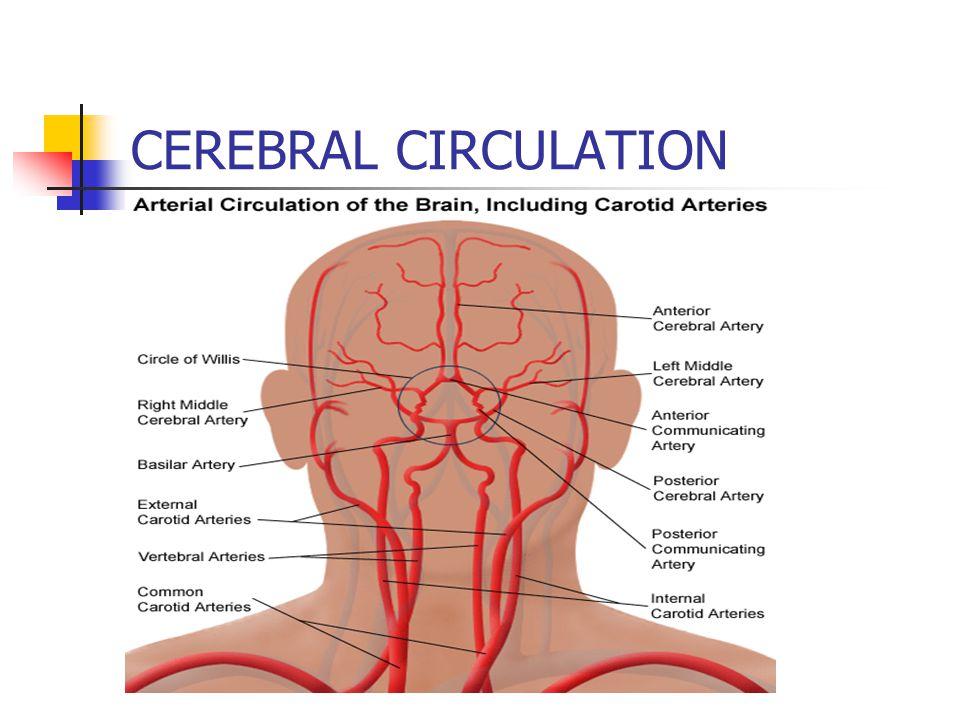 Cerebral Circulation And Cerebrospinal Fluid Csf Sultan Ayoub Meo