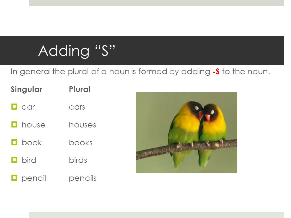 Adding S In general the plural of a noun is formed by adding -S to the noun.