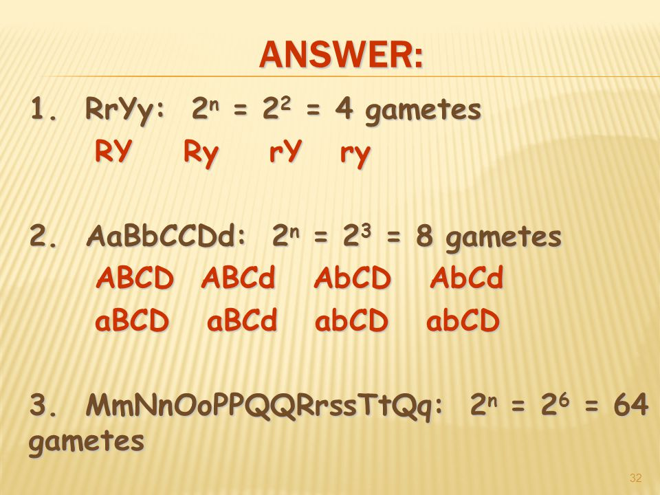 ANSWER: RrYy: 2 n = 2 2 = 4 gametes RY Ry rY ry 2.