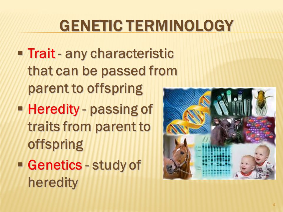 GENETIC TERMINOLOGY  Trait - any characteristic that can be passed from parent to offspring  Heredity - passing of traits from parent to offspring  Genetics - study of heredity 4