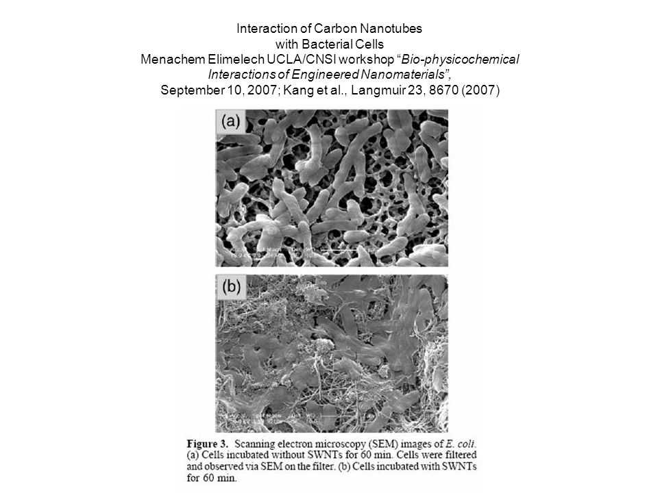 Interaction of Carbon Nanotubes with Bacterial Cells Menachem Elimelech UCLA/CNSI workshop Bio-physicochemical Interactions of Engineered Nanomaterials, September 10, 2007; Kang et al., Langmuir 23, 8670 (2007)