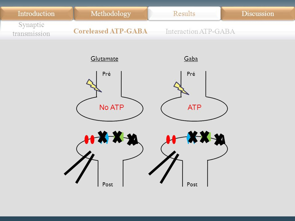 Introduction Méthodologie Modèle Données actuelles Résultats Discussion Résumé Introduction Methodology Synaptic transmission Results Discussion Coreleased ATP-GABA Pré Post Glutamate No ATP Pré Post Gaba ATP Interaction ATP-GABA