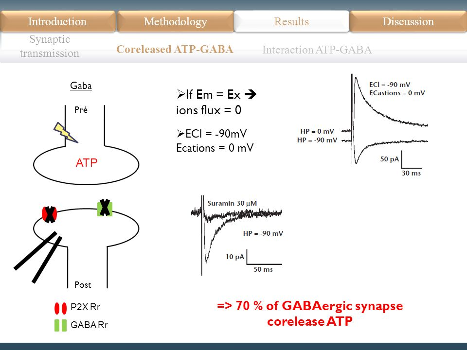 Introduction Méthodologie Modèle Données actuelles Résultats Discussion Résumé Introduction Methodology Synaptic transmission Results Discussion Coreleased ATP-GABA Pré Post Gaba ATP P2X Rr GABA Rr If Em = Ex ions flux = 0 => 70 % of GABAergic synapse corelease ATP ECl = -90mV Ecations = 0 mV Interaction ATP-GABA