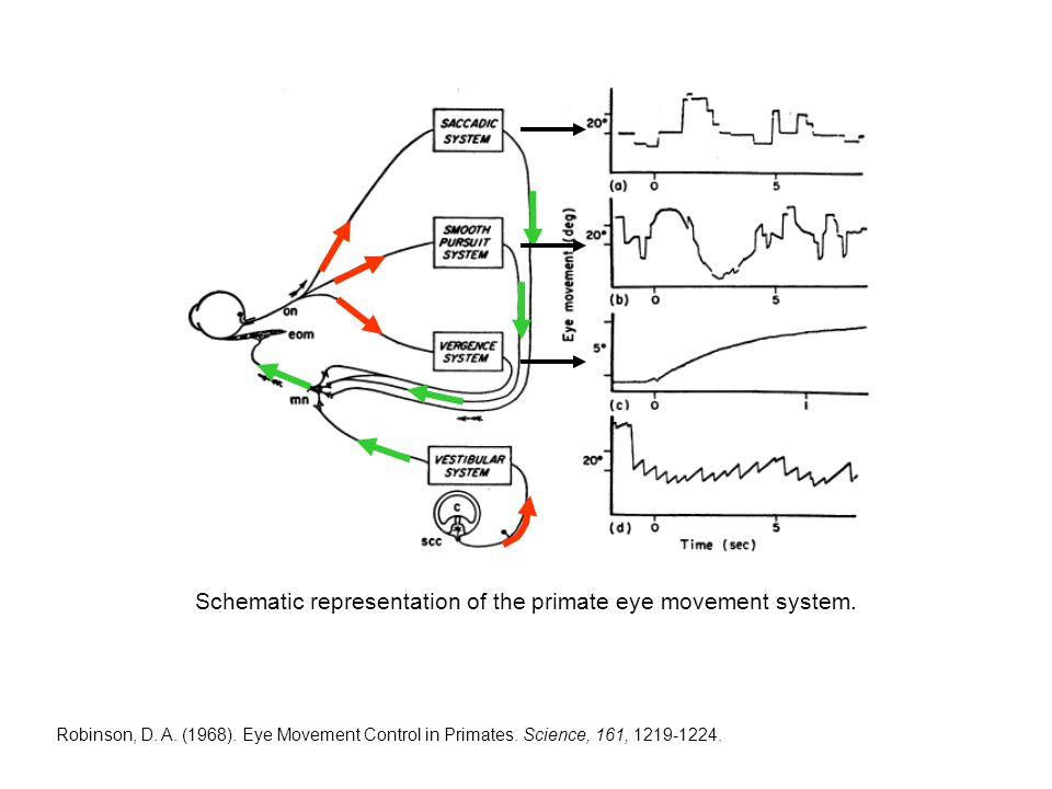 Robinson, D. A. (1968). Eye Movement Control in Primates.