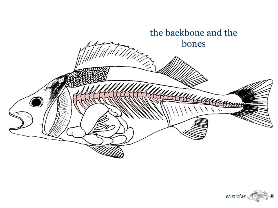 the backbone and the bones exercise