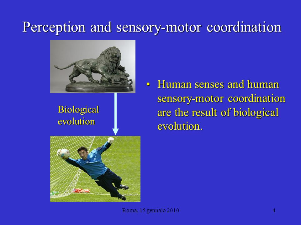 Roma, 15 gennaio 20104 Perception and sensory-motor coordination Human senses and human sensory-motor coordination are the result of biological evolution.Human senses and human sensory-motor coordination are the result of biological evolution.
