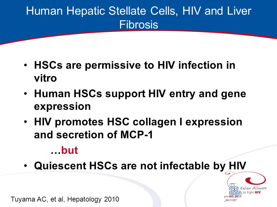 Human Hepatic Stellate Cells, HIV and Liver Fibrosis HSCs are permissive to HIV infection in vitro Human HSCs support HIV entry and gene expression HIV promotes HSC collagen I expression and secretion of MCP-1 …but Quiescent HSCs are not infectable by HIV Tuyama AC, et al, Hepatology 2010
