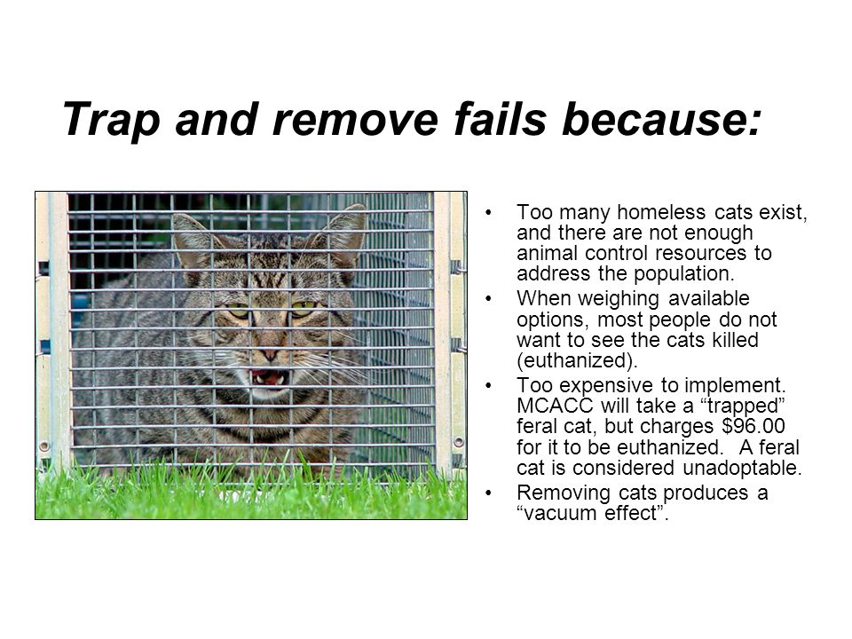 Trap and remove fails because: Too many homeless cats exist, and there are not enough animal control resources to address the population.