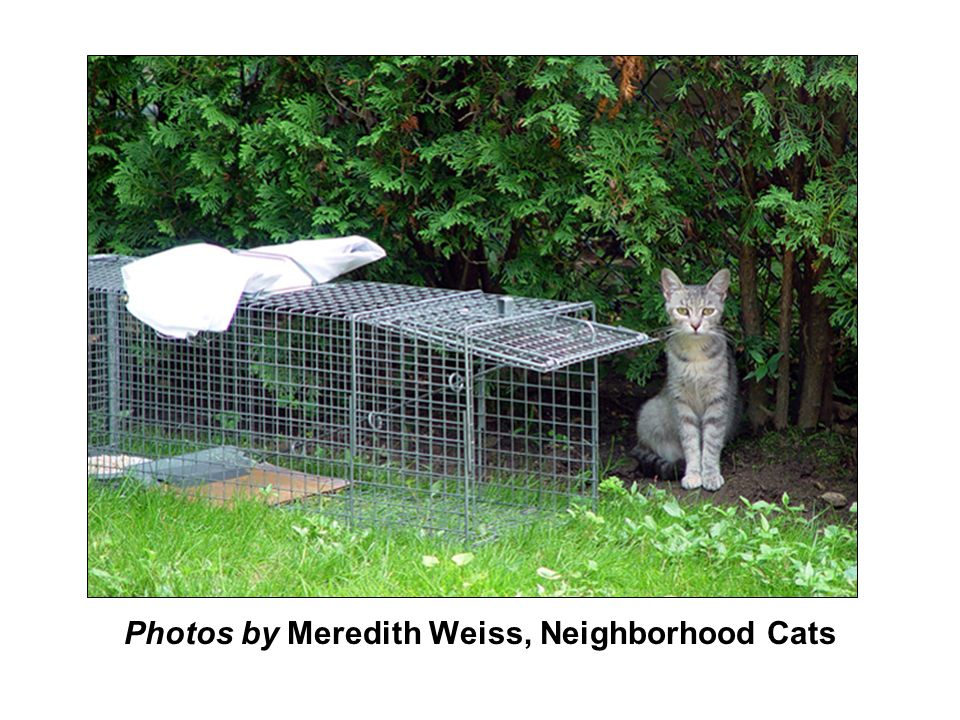 Photos by Meredith Weiss, Neighborhood Cats