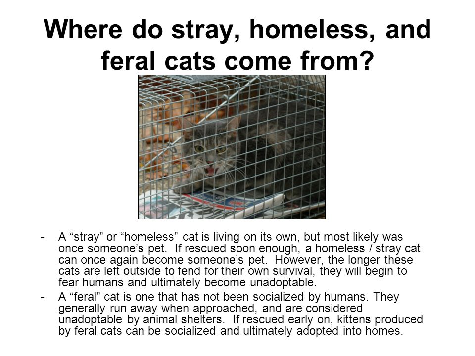 Where do stray, homeless, and feral cats come from.