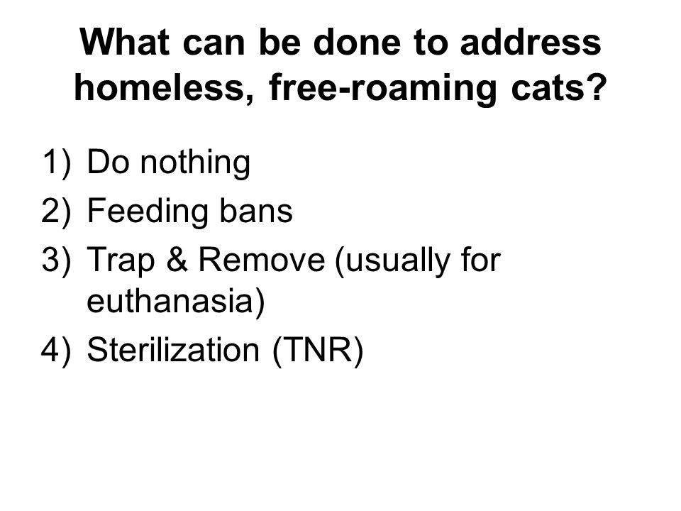 What can be done to address homeless, free-roaming cats.