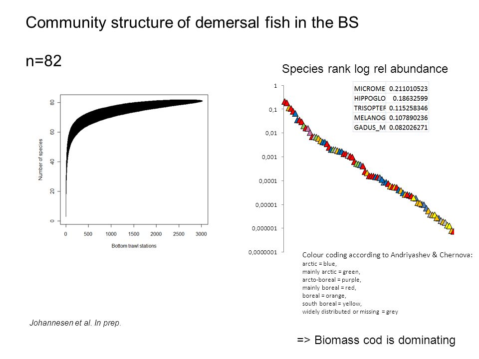 Community structure of demersal fish in the BS n=82 Species rank log rel abundance Colour coding according to Andriyashev & Chernova: arctic = blue, mainly arctic = green, arcto-boreal = purple, mainly boreal = red, boreal = orange, south boreal = yellow, widely distributed or missing = grey Johannesen et al.