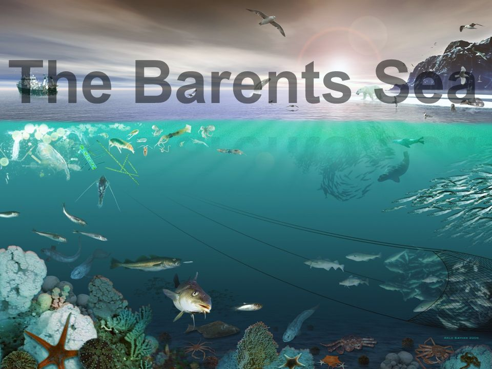 A Dynamic Stochastic Food Web model for the Barents Sea