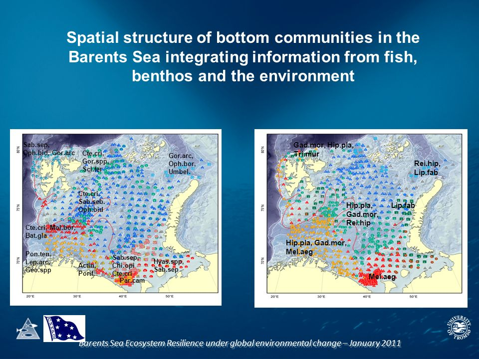 Spatial structure of bottom communities in the Barents Sea integrating information from fish, benthos and the environment Cte.cri, Sab.seb.