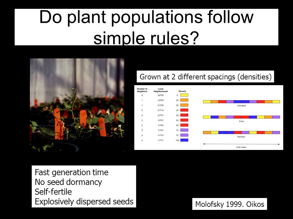 Do plant populations follow simple rules.