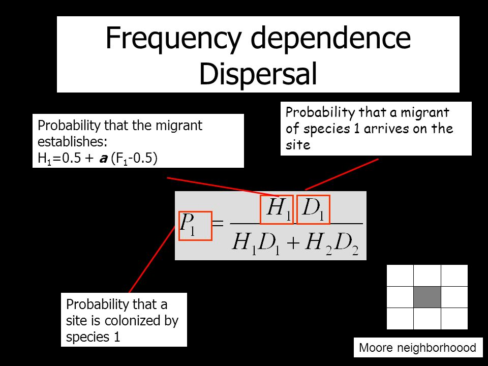 Probability that a migrant of species 1 arrives on the site Probability that the migrant establishes: H 1 =0.5 + a (F 1 -0.5) Probability that a site is colonized by species 1 Neighborhood shape Frequency dependence Dispersal Moore neighborhoood