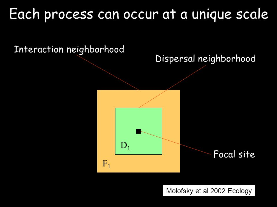 D1D1 F1F1 Interaction neighborhood Dispersal neighborhood Each process can occur at a unique scale Focal site Molofsky et al 2002 Ecology