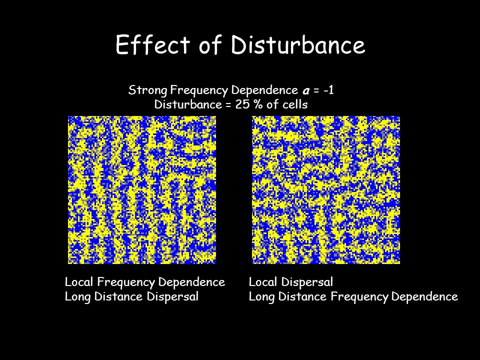 Effect of Disturbance Local Frequency Dependence Long Distance Dispersal Local Dispersal Long Distance Frequency Dependence Strong Frequency Dependence a = -1 Disturbance = 25 % of cells