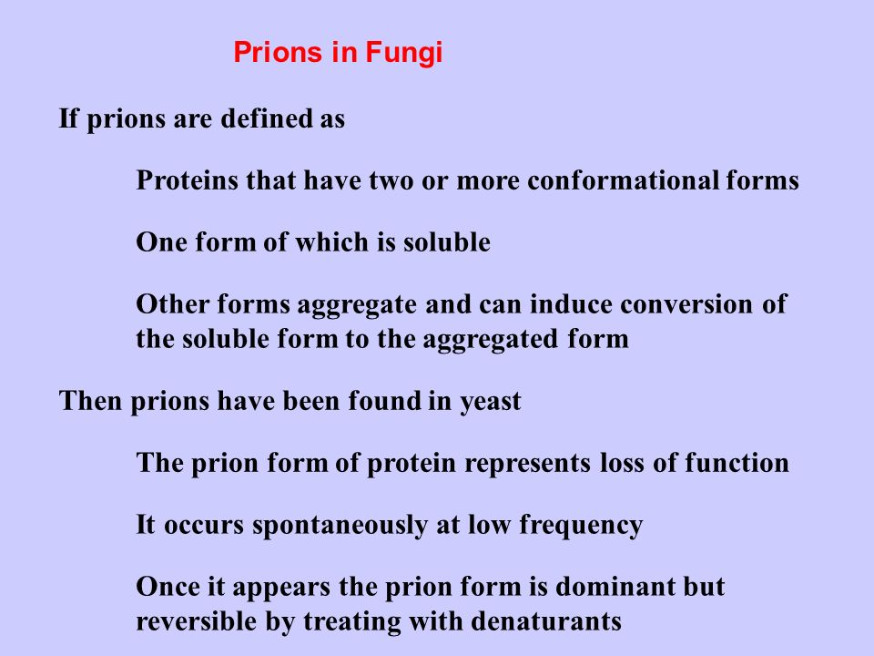 Prions in Fungi If prions are defined as Proteins that have two or more conformational forms One form of which is soluble Other forms aggregate and can induce conversion of the soluble form to the aggregated form Then prions have been found in yeast The prion form of protein represents loss of function Once it appears the prion form is dominant but reversible by treating with denaturants It occurs spontaneously at low frequency