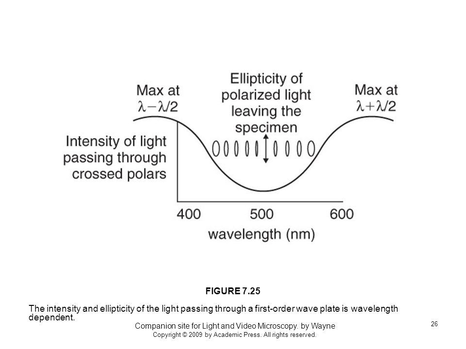 Companion site for Light and Video Microscopy. by Wayne Copyright © 2009 by Academic Press.