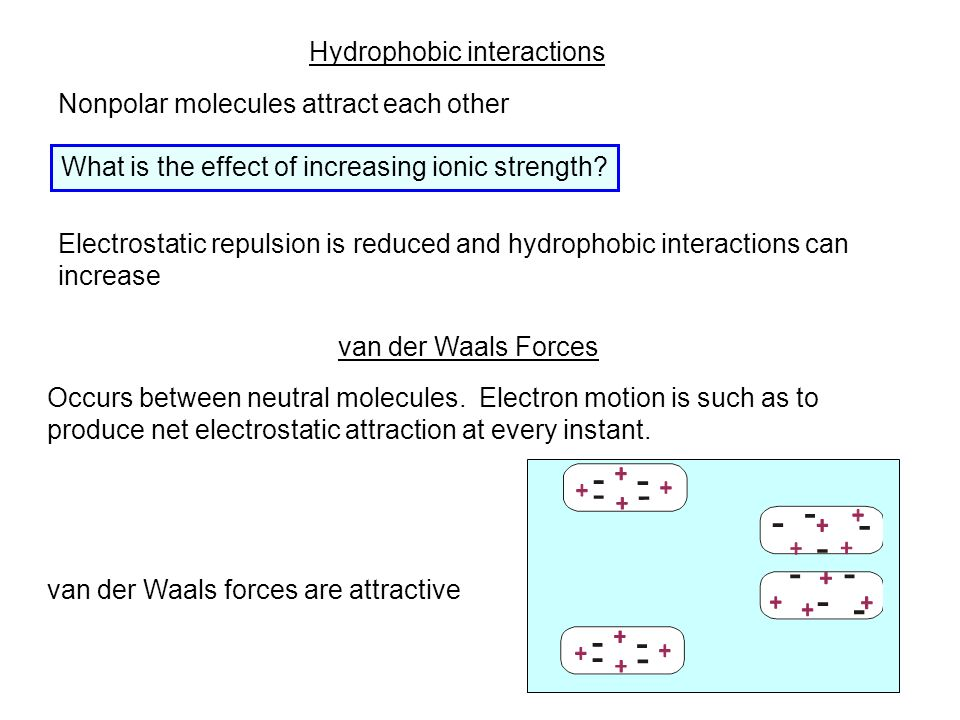Hydrophobic interactions Nonpolar molecules attract each other Electrostatic repulsion is reduced and hydrophobic interactions can increase What is the effect of increasing ionic strength.