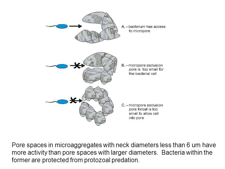 Pore spaces in microaggregates with neck diameters less than 6 um have more activity than pore spaces with larger diameters.