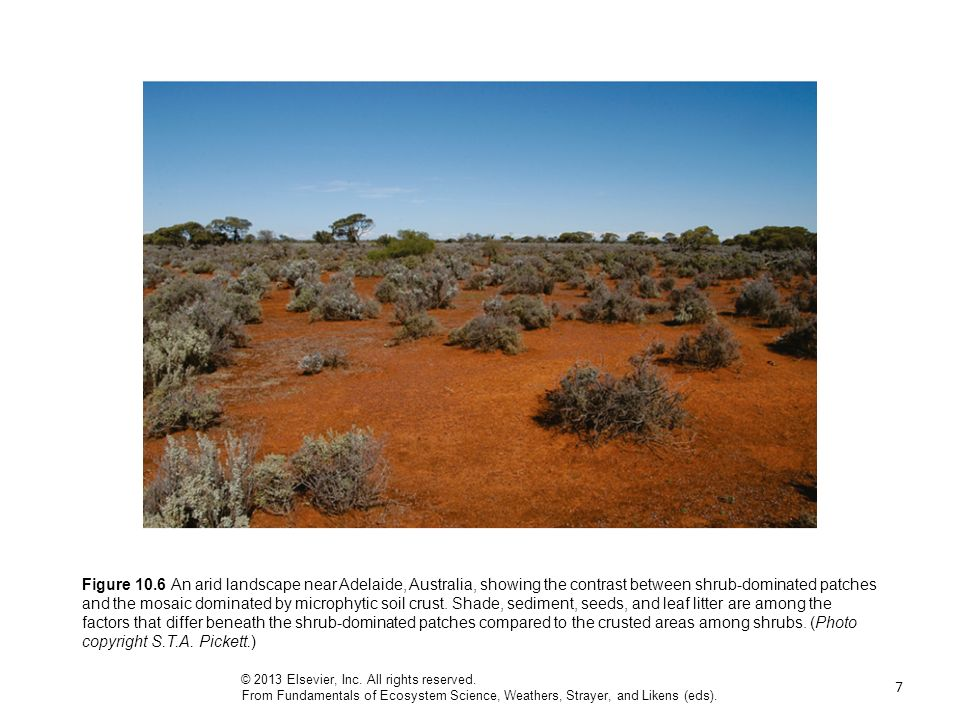 7 Figure 10.6 An arid landscape near Adelaide, Australia, showing the contrast between shrub-dominated patches and the mosaic dominated by microphytic soil crust.