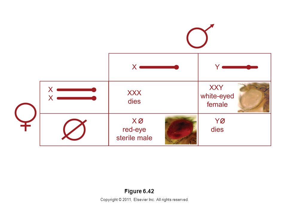 Copyright © 2011, Elsevier Inc. All rights reserved. Figure 6.42