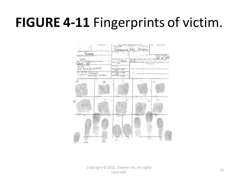 FIGURE 4-11 Fingerprints of victim. Copyright © 2012, Elsevier Inc. All rights reserved. 12