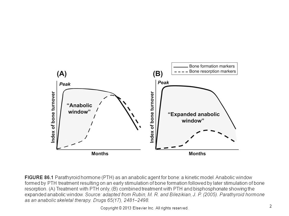 FIGURE 86.1 Parathyroid hormone (PTH) as an anabolic agent for bone: a kinetic model.
