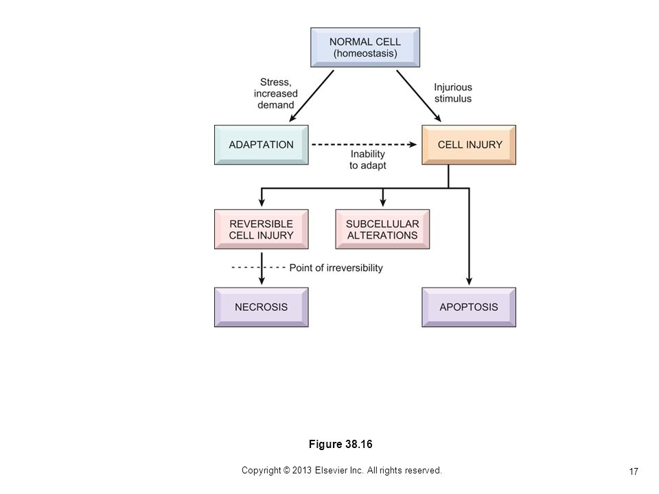 17 Copyright © 2013 Elsevier Inc. All rights reserved. Figure 38.16