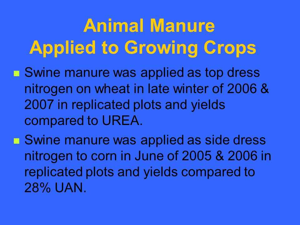 Animal Manure Applied to Growing Crops Swine manure was applied as top dress nitrogen on wheat in late winter of 2006 & 2007 in replicated plots and yields compared to UREA.