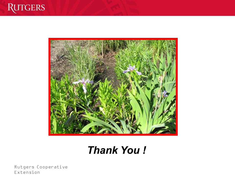 Rutgers Cooperative Extension Thank You !