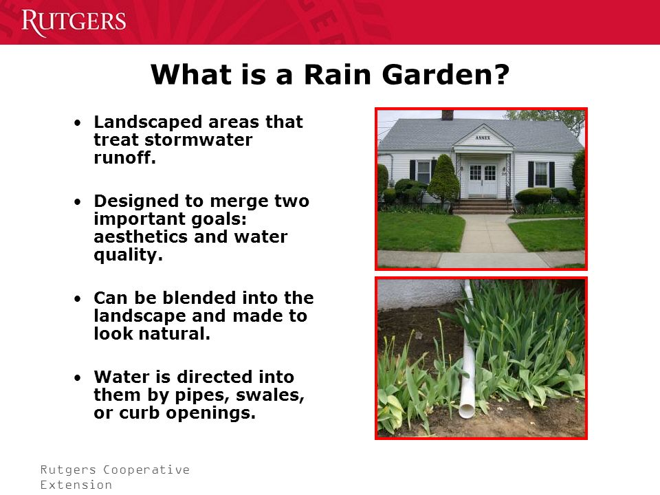 Rutgers Cooperative Extension What is a Rain Garden.