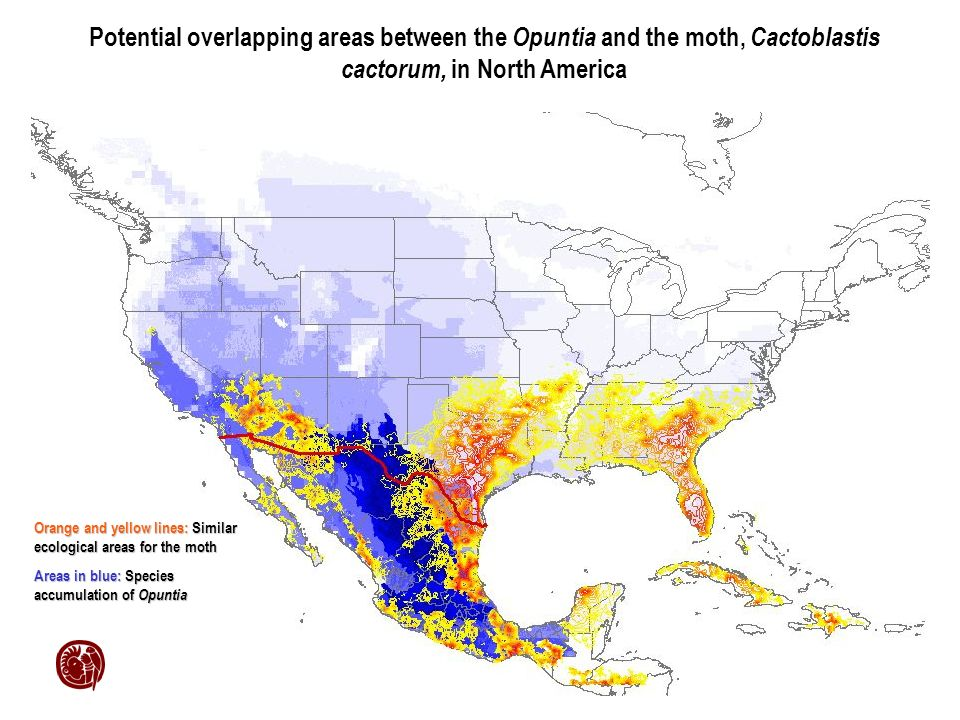 Potential overlapping areas between the Opuntia and the moth, Cactoblastis cactorum, in North America Orange and yellow lines: Similar ecological areas for the moth Areas in blue: Species accumulation of Opuntia