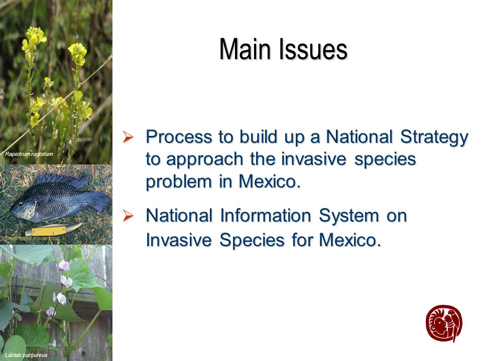 Lablab purpureus Rapistrum rugosum Oreochromis mossambicus Main Issues Process to build up a National Strategy to approach the invasive species problem in Mexico.