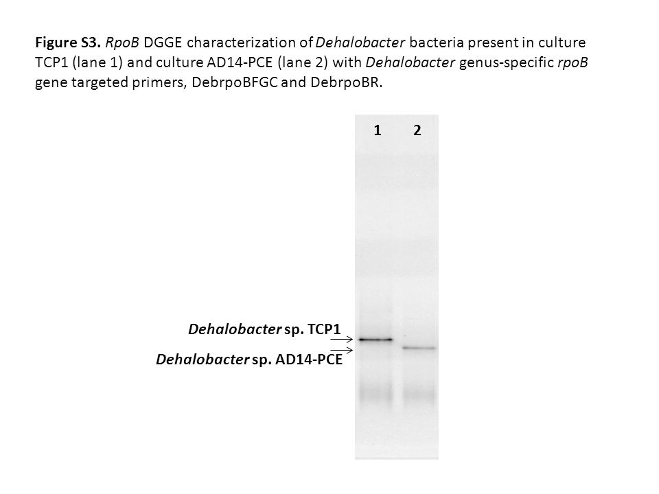 Dehalobacter sp. TCP1 1 Dehalobacter sp. AD14-PCE 2 Figure S3.