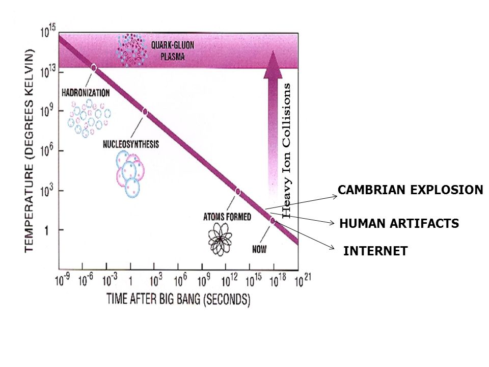 CAMBRIAN EXPLOSION HUMAN ARTIFACTS INTERNET