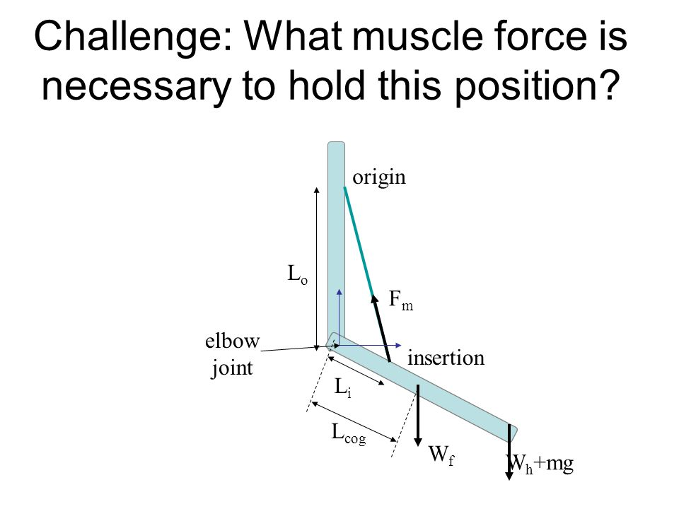 Challenge: What muscle force is necessary to hold this position.
